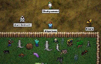 shaky_zoo.jpg