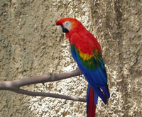 sb_zoo_parrot.jpg