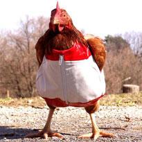 Super Chicken sent the