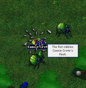 connie_fallen_e_forest.jpg