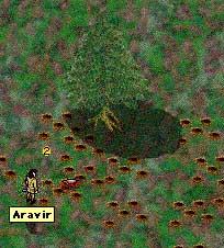 verminetree.jpg