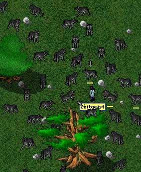 zeit_plays_with_doggies.jpg